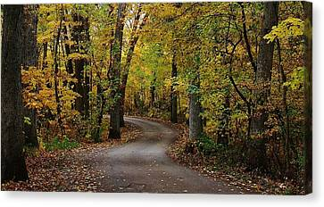Lowden State Park Canvas Print - Drive Through The Woods by Bruce Bley