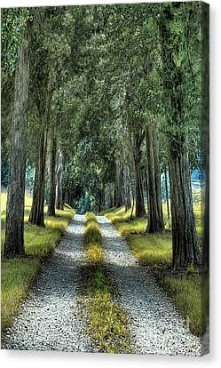 Driveway To Where Canvas Print by Sari Sauls