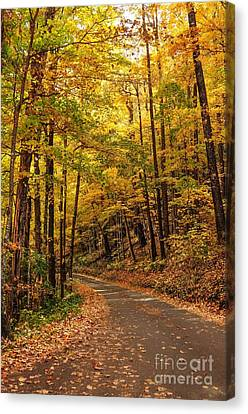 Driving Fall Mountain Roads. Canvas Print by Debbie Green