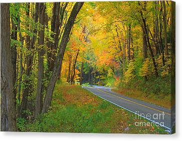 Driving Into Fall Canvas Print by Geraldine DeBoer