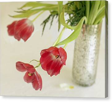Canvas Print featuring the photograph Drooping Tulips by Rosemary Aubut
