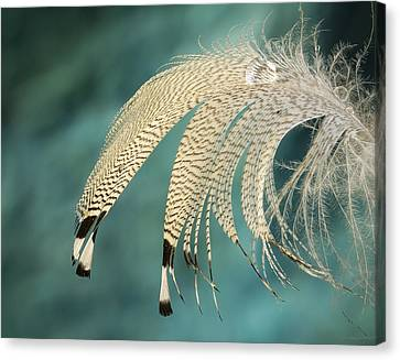 Droopy Feather Canvas Print