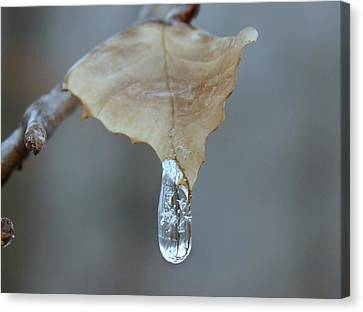 Drop Of Ice Canvas Print by Candice Trimble