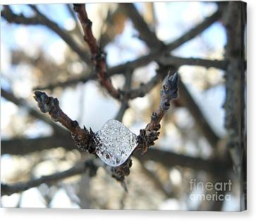Canvas Print featuring the photograph Drop Of Ice by Jane Ford
