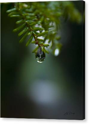 Drop Of Life In The Woods Canvas Print