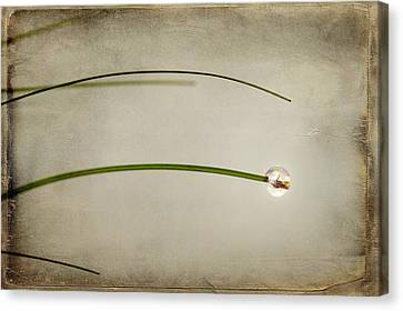 Drop Canvas Print - Drop by Svetlana Sewell