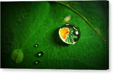 Droplet Of Love Canvas Print