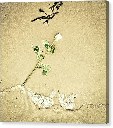 Flowerrs Canvas Print - Dropped Flower by Tom Gowanlock