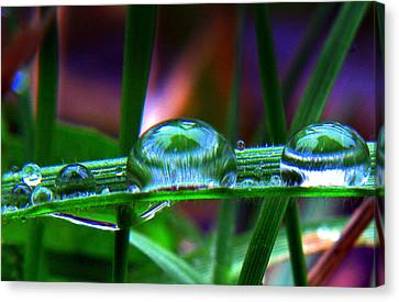 Drops In Color Canvas Print by Suzy Piatt