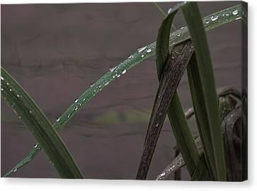 Drops Canvas Print by Leif Sohlman