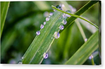 Canvas Print featuring the photograph Drops On Grass by Rob Sellers