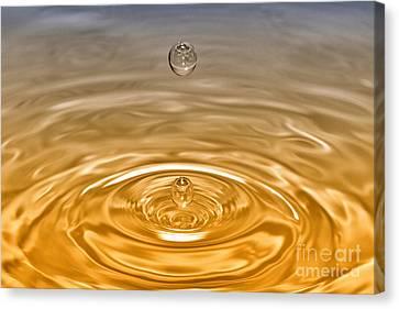 Drops Canvas Print by Veikko Suikkanen