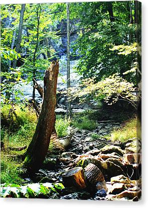 Dry Creek Canvas Print