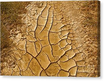 Dry Lands Canvas Print by Boon Mee