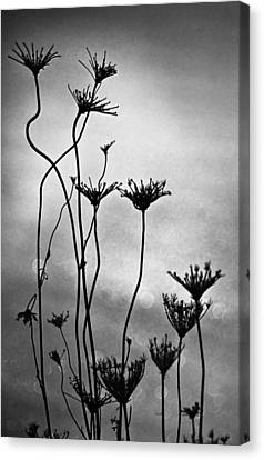 Canvas Print featuring the photograph Dry Plants by Arkady Kunysz