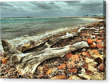 Dry Tortugas Driftwood Canvas Print by Adam Jewell