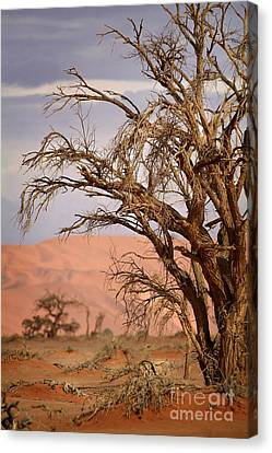 Dry Tree In The Desert Canvas Print