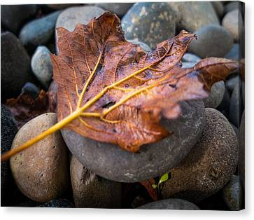 Canvas Print featuring the photograph Drying Leaf by Mike Lee