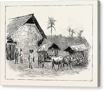 Drying Sheds For Tobacco, Sumatra, Indonesia Canvas Print