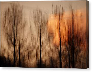 Canvas Print featuring the photograph Drying Wet by Lorenzo Cassina