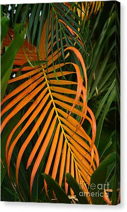Canvas Print featuring the photograph Dryness by Michelle Meenawong