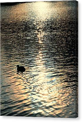 Canvas Print featuring the photograph Duck At Sunset by Marwan Khoury