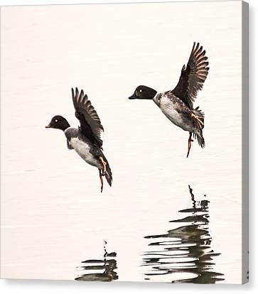 Duck Ballet Canvas Print