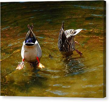 Canvas Print featuring the photograph Duck Butts by Steven Reed