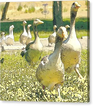 Duck Duck Goose Canvas Print by Artist and Photographer Laura Wrede