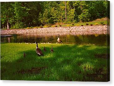 Canvas Print featuring the photograph Duck Family Getting Back From Pond by Amazing Photographs AKA Christian Wilson