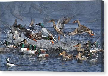 Frenzy Canvas Print - Duck Frenzy by Angie Vogel