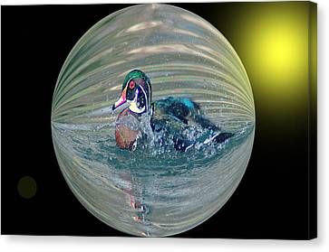 Digital Touch Canvas Print - Duck In A Bubble  by Jeff Swan