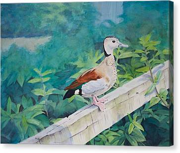 Duck On A Fence Canvas Print by Christopher Reid