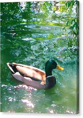 Birds Canvas Print - Duck On Green Pond by Amy Vangsgard