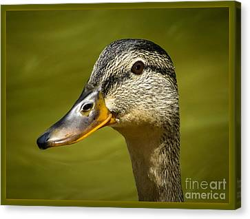 Canvas Print featuring the photograph Duck Protrait by Brenda Bostic