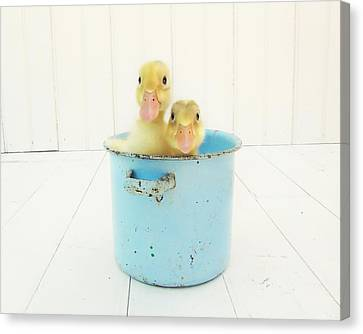 White Birds Canvas Print - Duck Soup by Amy Tyler