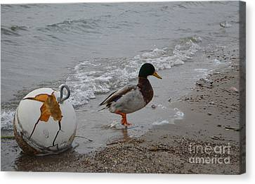 Duckie Duckie Canvas Print