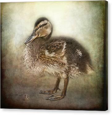 Ducklings Canvas Print - Duckling by Pauline Fowler