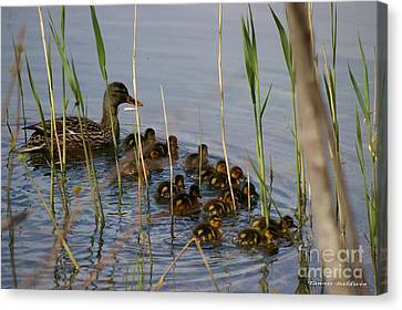 Ducklings And Mom Canvas Print by Tannis  Baldwin