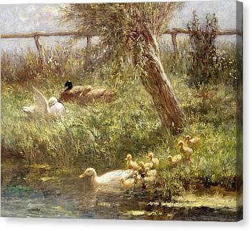Ducklings Canvas Print - Ducks And Ducklings by David Adolph Constant Artz