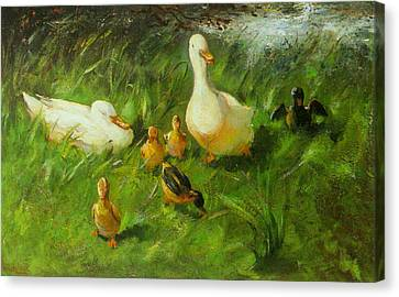 Ducks And Ducklings On A Riverbank Canvas Print by Franz Helfferich