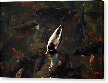 Ducks And Fish Canvas Print by Bonita Hensley