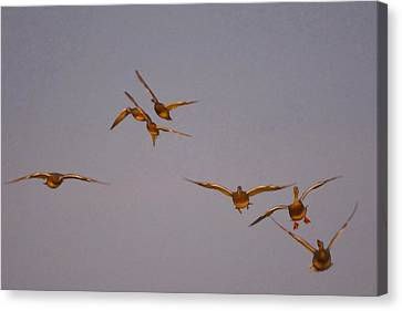 Mountain View Canvas Print - Ducks Are Flying High by Tommytechno Sweden