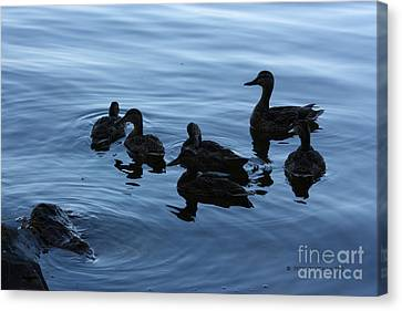 Ducks At Dusk Canvas Print