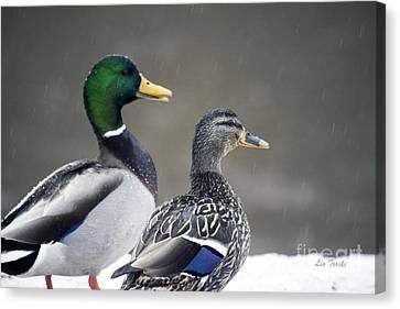 Ducks Caught In The Rain Canvas Print