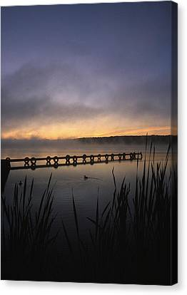 Ducks Dock And Reeds Canvas Print