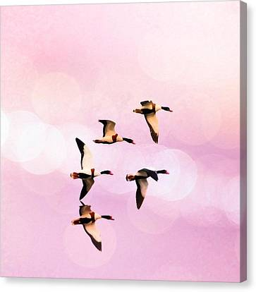Ducks Flying High And Bokhe Canvas Print