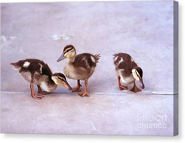 Ducks In A Row Canvas Print by Clare VanderVeen