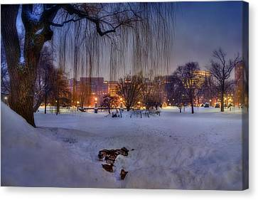 Ducks In Boston Public Garden In The Snow Canvas Print
