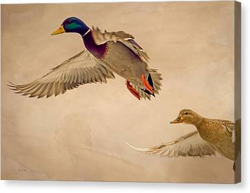 Ducks In Flight Canvas Print by Bob Orsillo